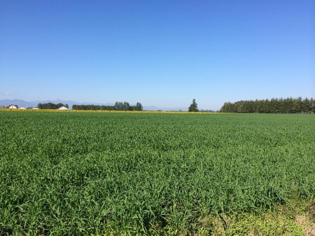 夏の農村風景